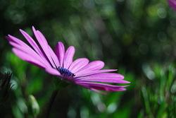 Greyton flower
