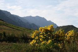 Greyton nature