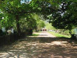 Greyton Oak avenue